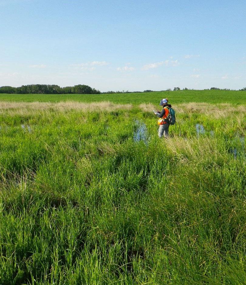 Surveyor in the field